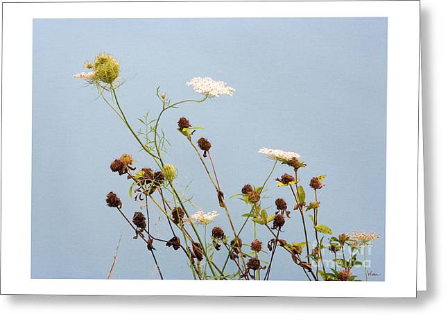 Queen Anne's Lace And Dried Clovers Greeting Card