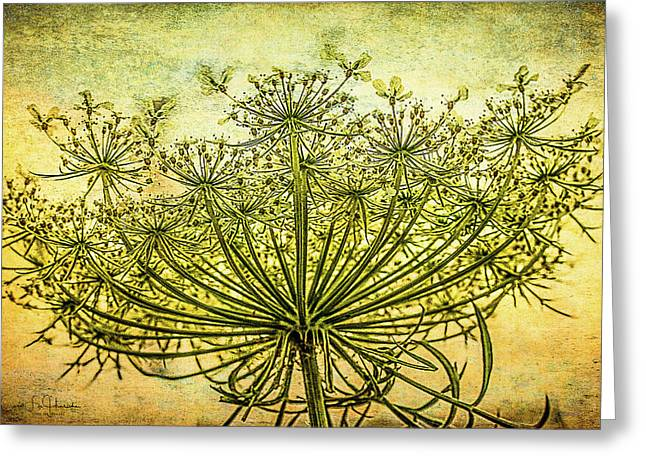 Queen Anne's Lace At Sunrise Greeting Card