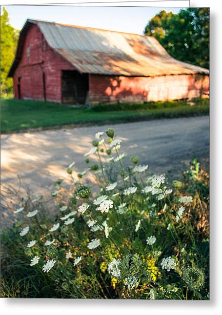 Queen Anne's Lace By The Barn Greeting Card