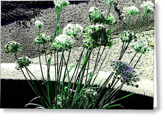 Greeting Card featuring the photograph Queen Anne's Lace by Lenore Senior