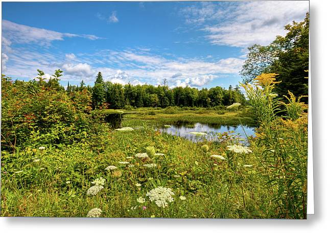 Greeting Card featuring the photograph Queen Anne's Lace On The Moose River by David Patterson