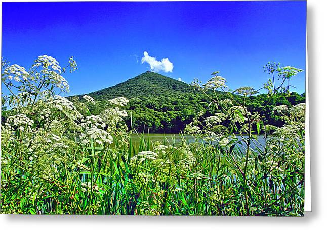 Queen Anne's Lace, Peaks Of Otter  Greeting Card