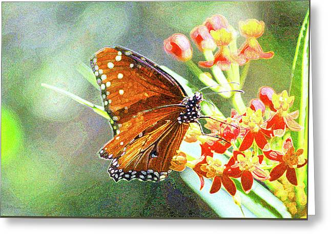 Queen Butterfly Greeting Card by Inspirational Photo Creations Audrey Woods