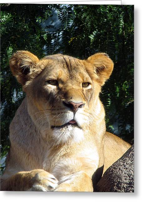 Queen Of The Beasts Greeting Card