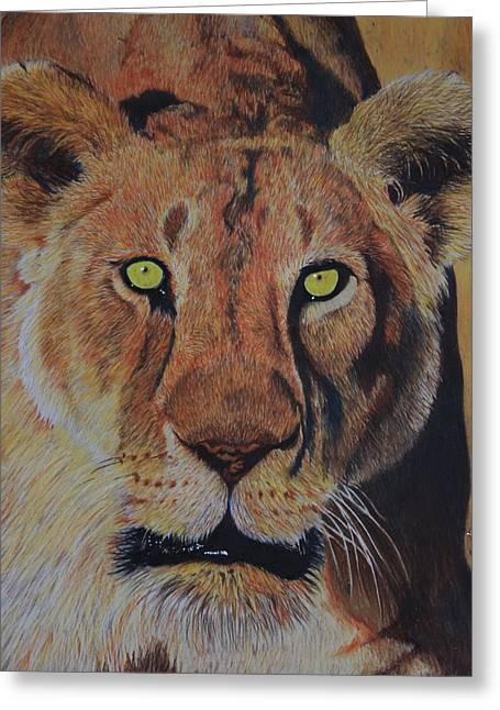 Queen Of The Jungle Greeting Card by Don MacCarthy