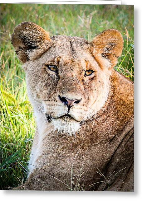 Queen Of The Mara Greeting Card