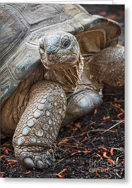 Queen Tortoise Greeting Card by Jamie Pham