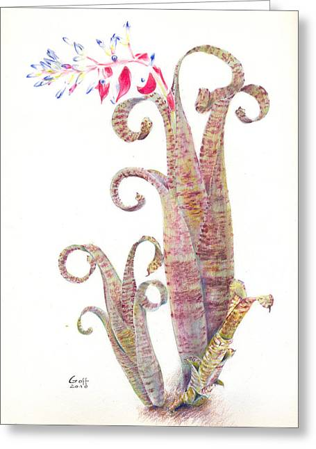 Quesnelia Marmorata Tim Plowman Greeting Card