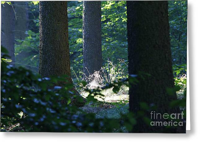 Quiet And Peaceful Place In The Forest Greeting Card by Michal Boubin