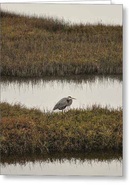 Quiet Heron Greeting Card