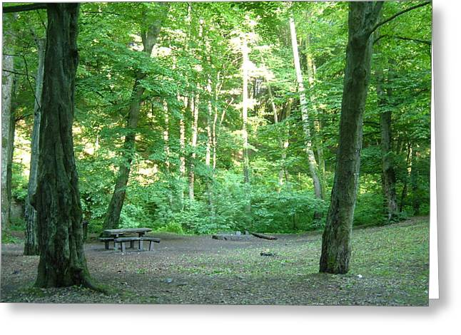Quiet Picnic Area In The Woods Greeting Card by Helena Helm