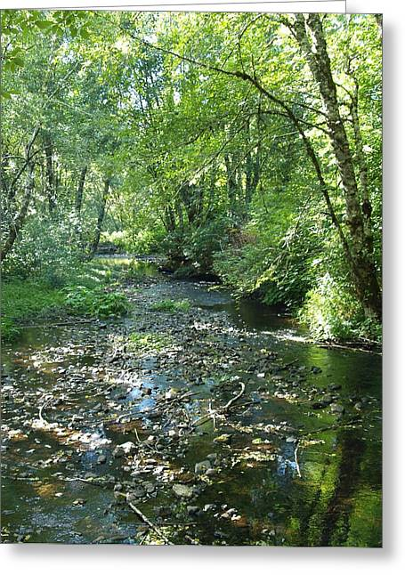 Quiet Stream Greeting Card by James Johnstone