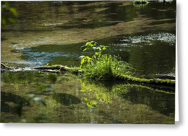Quiet Trout Stream Greeting Card