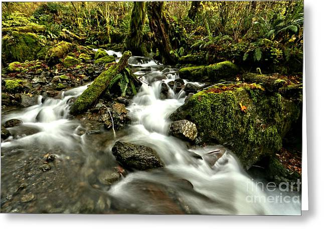 Quinault Rainforest Streams Greeting Card by Adam Jewell