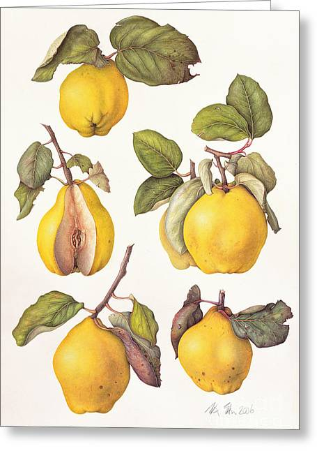 Quinces Greeting Card by Margaret Ann Eden