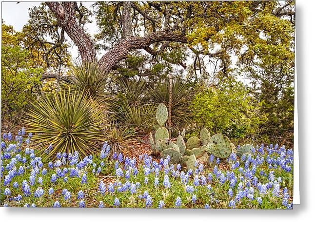 Quintessential Texas Hill Country - Yucca Prickly Pear And Bluebonnets - Willow City Loop  Greeting Card by Silvio Ligutti