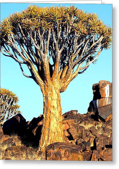 Greeting Card featuring the photograph Quiver Tree In Namibia by Riana Van Staden