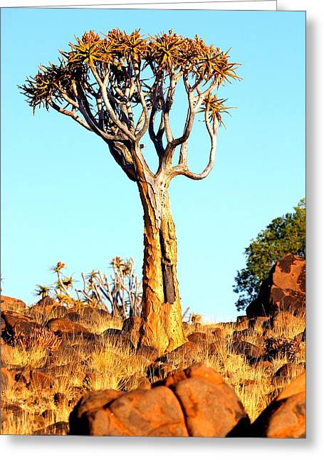 Greeting Card featuring the photograph Quiver Tree by Riana Van Staden