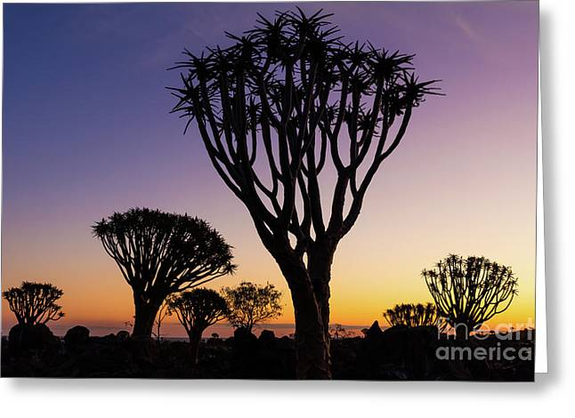 Quiver Trees 11 Greeting Card by Inge Johnsson