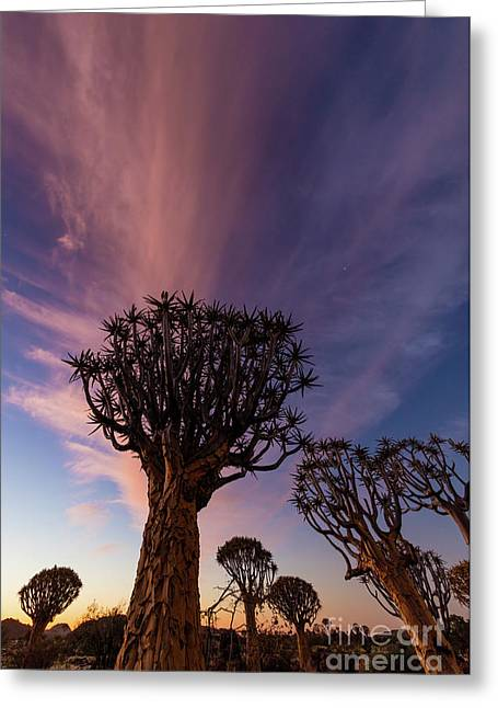 Quiver Trees 14 Greeting Card by Inge Johnsson