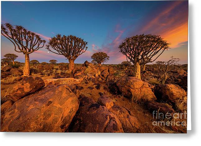 Quiver Trees 9 Greeting Card by Inge Johnsson