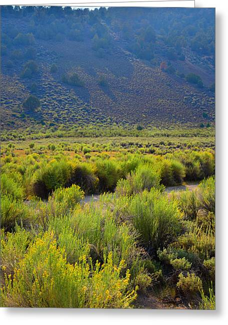 Rabbit Brush In Bloom Greeting Card