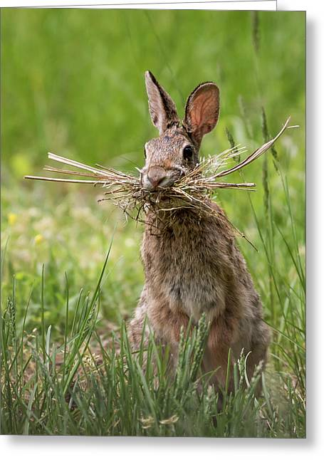Rabbit Collector  Greeting Card by Terry DeLuco