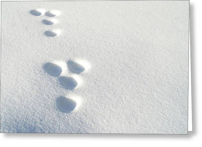 Rabbit Footprints In The Snow 2 Greeting Card by Jack Dagley