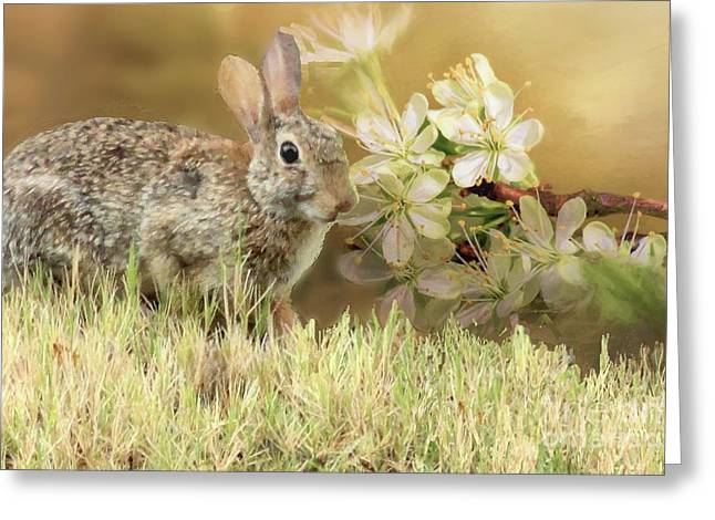 Eastern Cottontail Rabbit In Grass Greeting Card