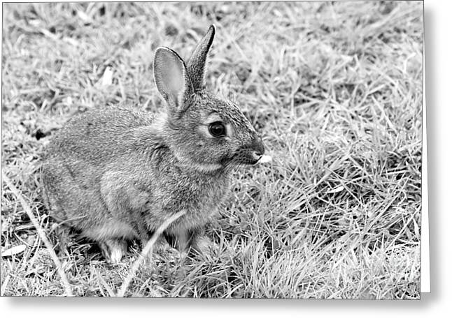 Rabbit Greeting Card by Louise Heusinkveld