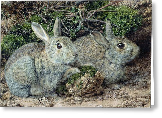 Rabbits Greeting Card by John Sherrin
