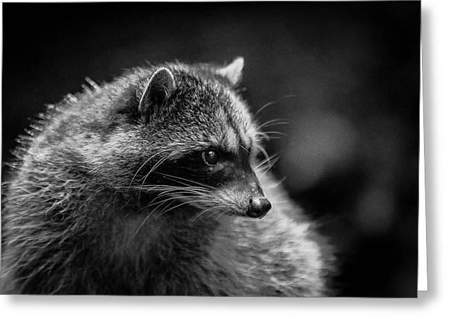 Raccoon 3 Greeting Card