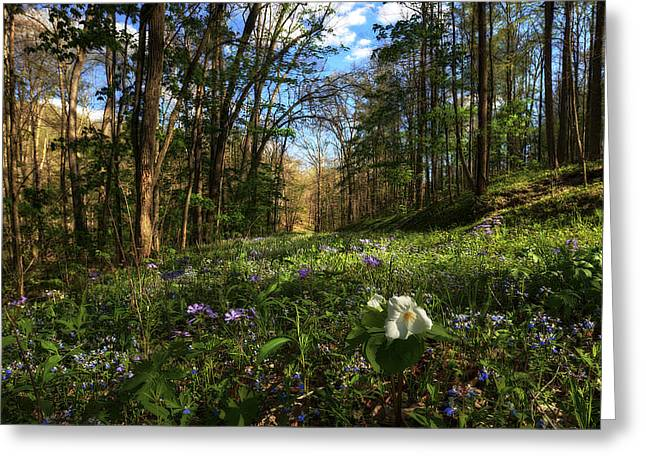 Raccoon Creek Flowers Greeting Card