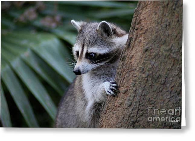 Raccoon Greeting Card by Scott Pellegrin