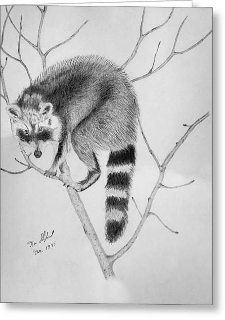 Raccoon Treed  Greeting Card by Daniel Shuford