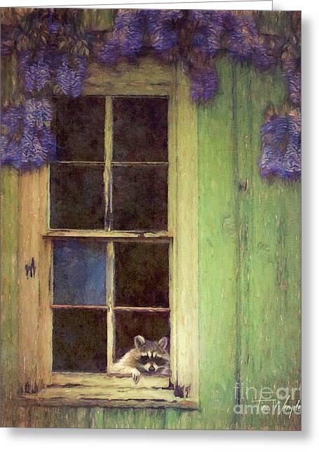 Raccoon Window Greeting Card by Tim Wemple