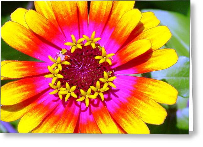Radial Radiance Greeting Card by Ward Smith