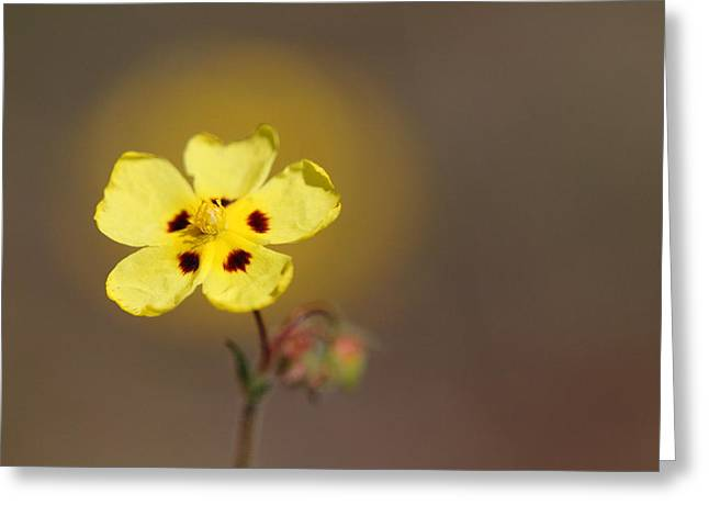 Greeting Card featuring the photograph Radiate by Richard Patmore