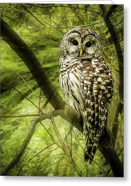 Radiating Barred Owl Greeting Card