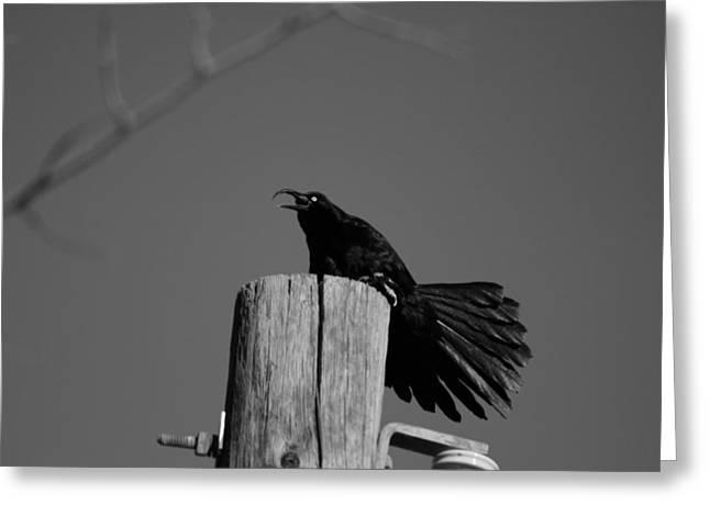 Raging Crow Greeting Card