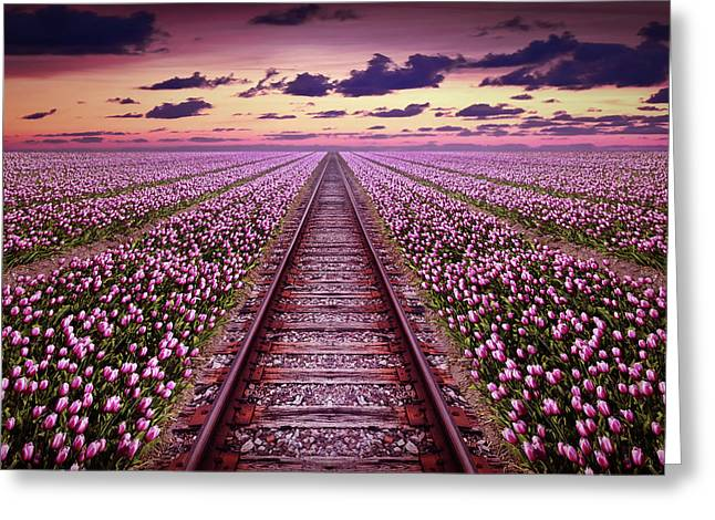 Railway In A Purple Tulip Field Greeting Card