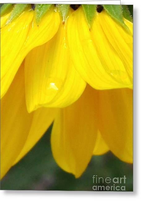 Rain And Sunshine On A Colorado Wildflower Greeting Card