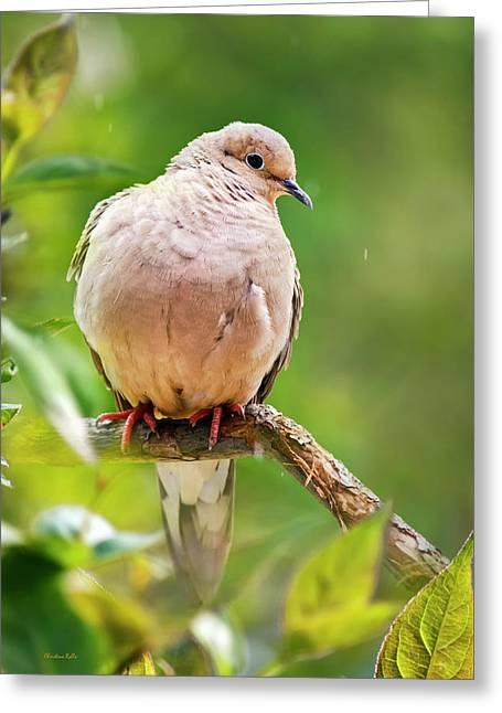 Rain Dove Greeting Card by Christina Rollo