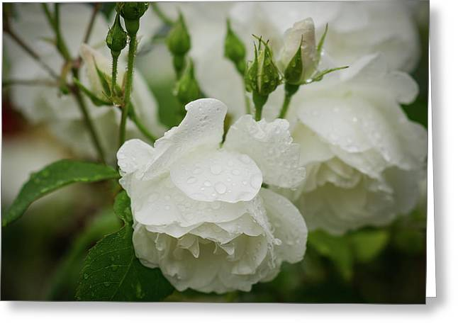 Rain Drops In Our Garden Greeting Card