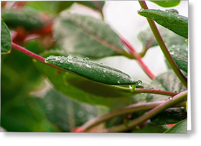 Rain Drops On A Leaf Greeting Card