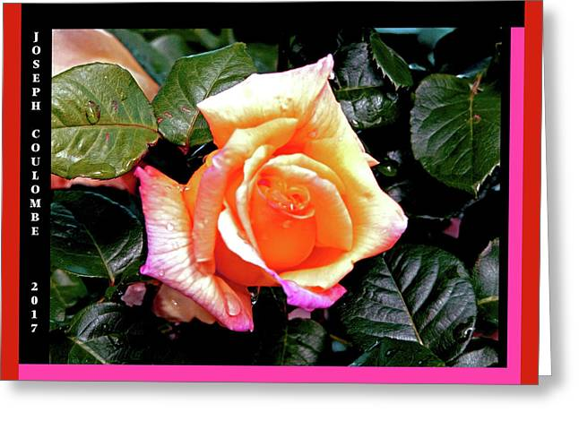 Rain Drops On A Rose Greeting Card