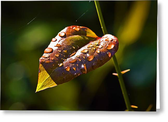 Rain Drops On Leaf Greeting Card by Michael Whitaker