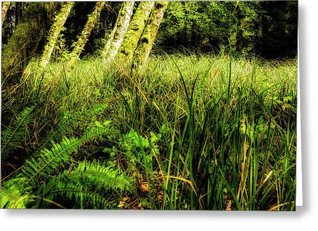 Rain Forest At Fort Stevens Greeting Card by Dennis Adams