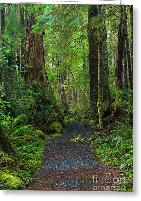 Rain Forest Glow Greeting Card by Adam Jewell