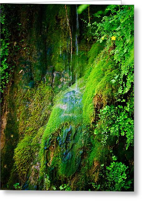 Rain Forest Greeting Card by Louis Dallara